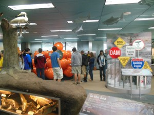 Environmental science students explore the Nimbus Dam visitor center and its many educational exhibits. Because the students saw few fish at the dam, the visitor center proved the main attraction at Nimbus.