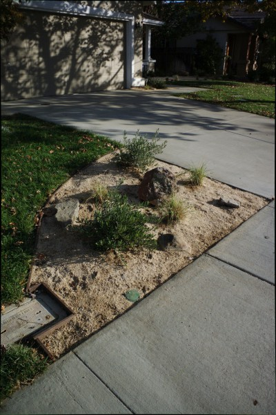 Many families are now changing the grass in their front yards to drought resistant plants. Photo by J Jiang