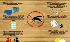 Fight back against the mosquito menace
