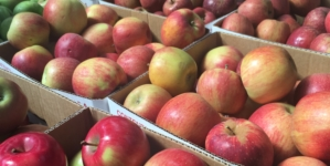REVIEW: Embrace autumn at Apple Hill