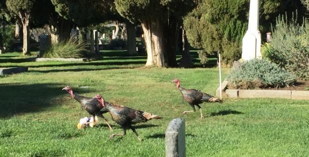 OPINION: Turkey trapping is absurd