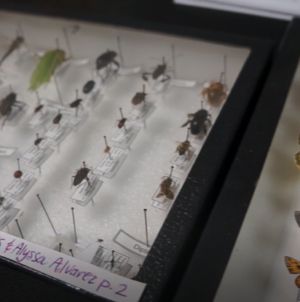 Zoology and botany students complete bug project
