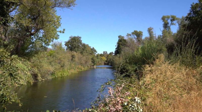 Putah Creek flanked by dense vegetation