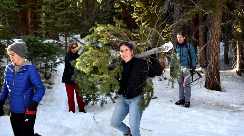 PHOTOS: Cutting Down Christmas Trees in the National Forest